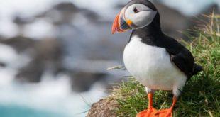 Los ciclones matan de hambre a las aves marinas del Atlántico Norte